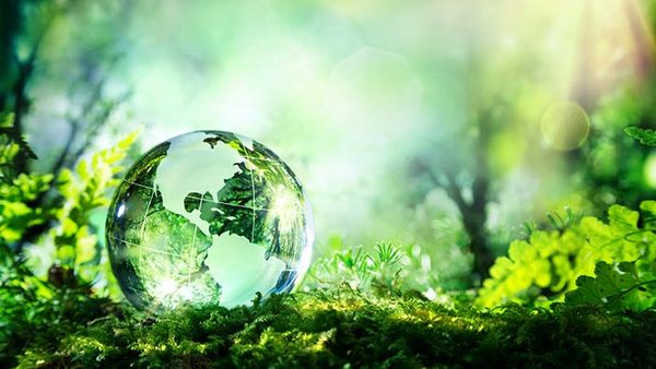 Celebrate World Environment Day with ND Energy and ECI